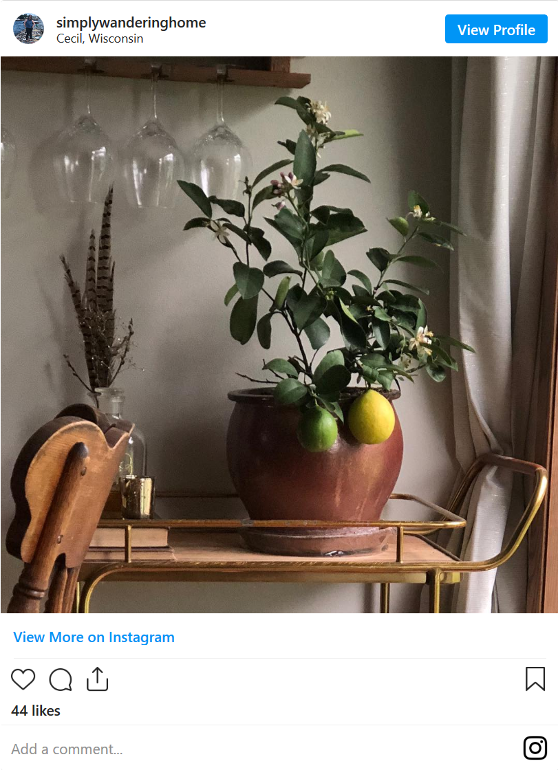 Screenshot_2020-06-26 How To Grow A Lemon Tree - Indoor Plant Guide.png
