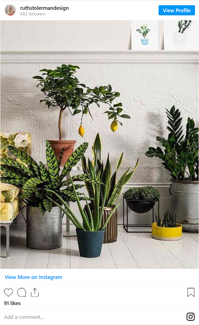 Screenshot_2020-06-26 How To Grow A Lemon Tree - Indoor Plant Guide(1).png