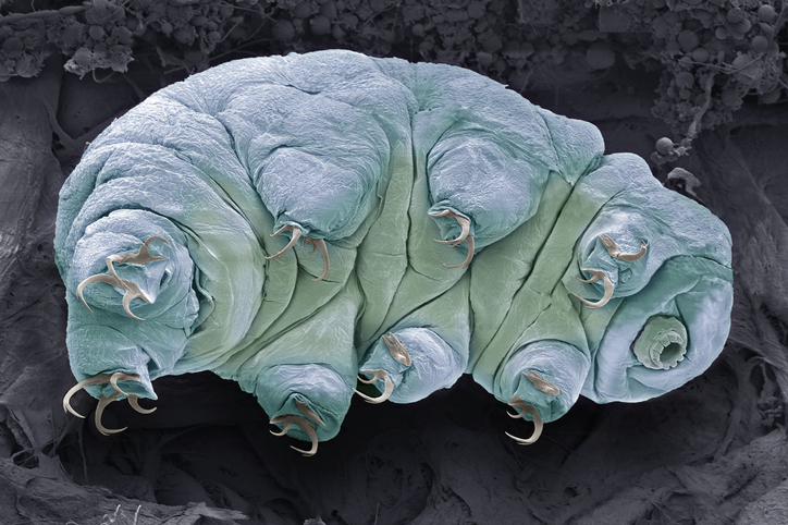 a bluish-green creature resembling a fat caterpillar with claws and a small tube for a face