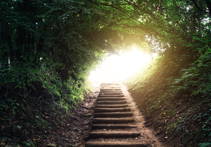 a stairway in a shady forest leading to a bright light