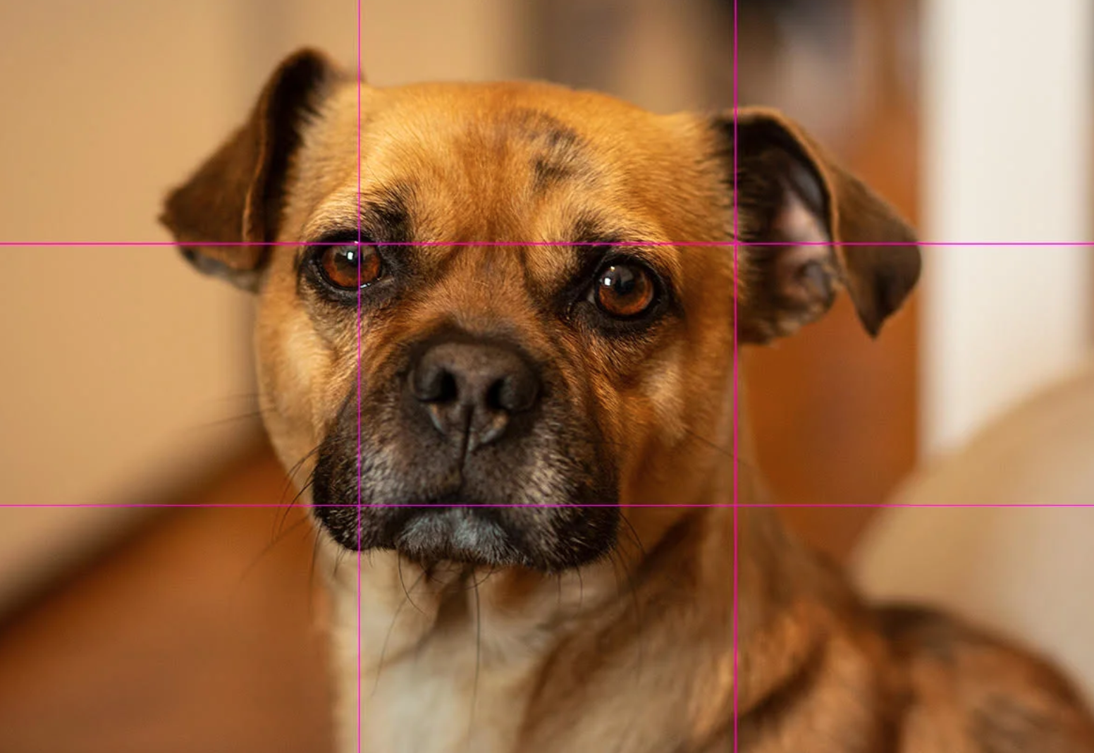 dog with grid overlay